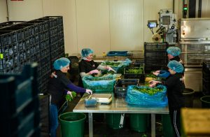 Production worker - fishes, seafood